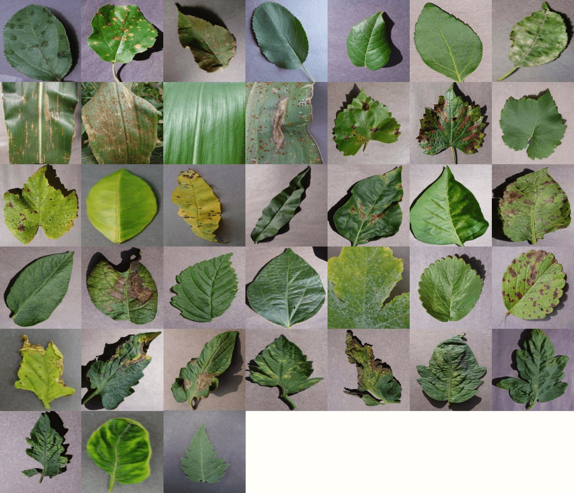 38 classes of crop-disease pairs in the dataset